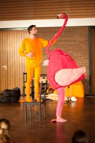 Flamingofütterung - Tiere!