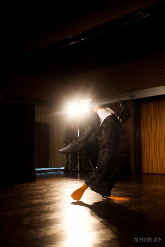 Pinguin Flamenco - Tiere!